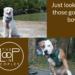 Focus Dog Training